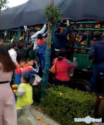 今日热点:家长带孩子抢橘子 双11来了双十一玩法攻略