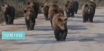 饲养员遭熊攻击身亡现场疑曝光!警方调查男子包养多名未成年幼女