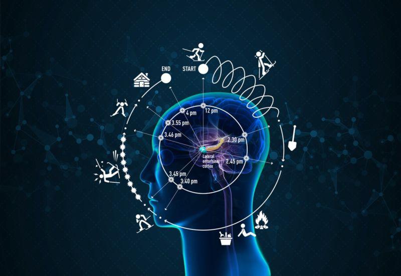 ,科学家发现大脑内部的时钟影响我们感知时间