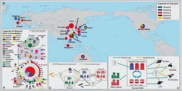 全球新冠病毒基因序列类型分布图