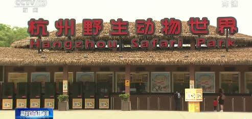 金钱豹出逃杭州野生动物世界致歉!负责人或被判刑 第二只豹正在恢复