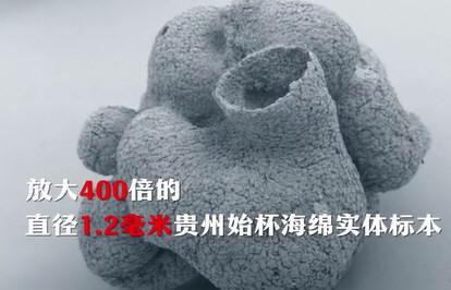 贵州发现6亿岁海绵宝宝