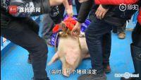 今日热点:景区回应绑猪蹦极并致歉 蹦极猪被送屠宰场