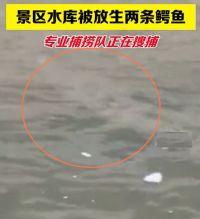 两条鳄鱼幼崽被非法放生水库!鳄鱼被放生水库专业捕捞队正在处置